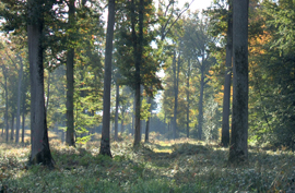 foret-2